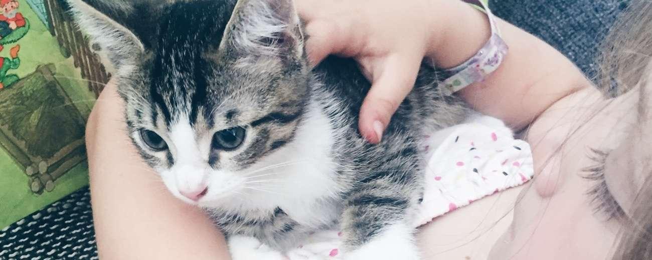 mamawahnsinnhochdrei mamablog Katze 13