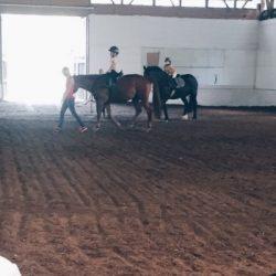 Pferde MamaWahnsinnHochDrei