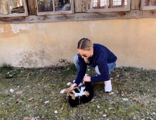 Hund und Kinder: Unsere Familie ist gewachsen!