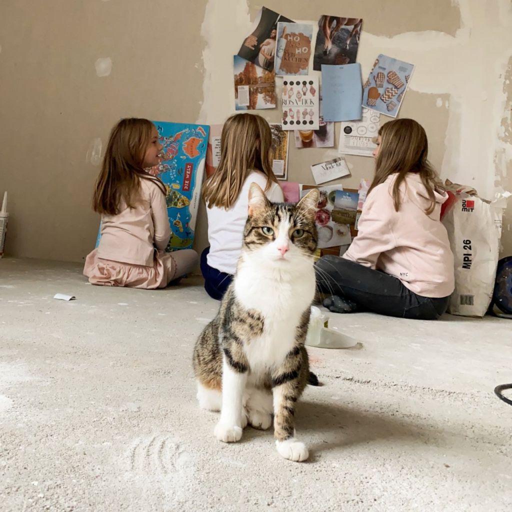 Made my day - beim Erstellen des Vision Boards, die Katze mittendrin statt nur dabei!