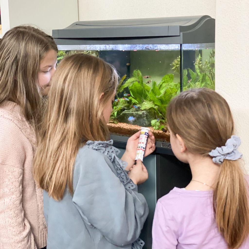 Die Wasserqualität ist sehr wichtig. Aquarium für Kinder - die Kinder helfen mit.